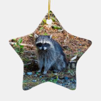 Ornement Étoile En Céramique Raton laveur à l'état du parc WA de défi de point