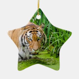 Ornement Étoile En Céramique Tigre sibérien