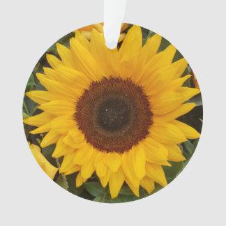 Ornement floral de photographie de fleur de