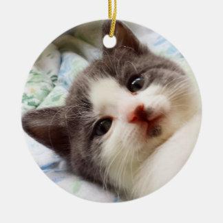 Ornement gris et blanc de chaton