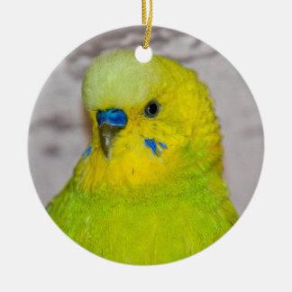 Ornement jaune de perruche