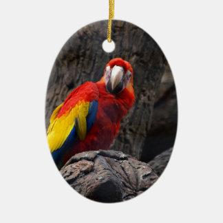 Ornement Ovale En Céramique Animal de bec d'ailes d'arums d'animal familier de