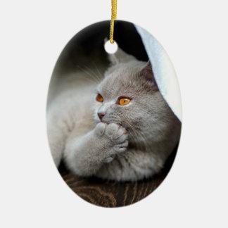 Ornement Ovale En Céramique Chat britannique - chat drôle - chat gris
