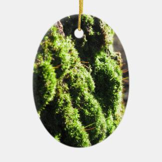 Ornement Ovale En Céramique La mousse verte dans le détail de nature de la