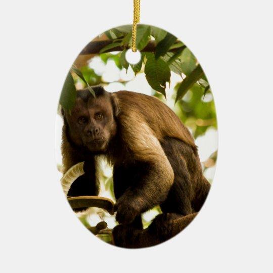 Ornement Ovale En Céramique Miscellaneous - Black-Capped Capuchin & Branch