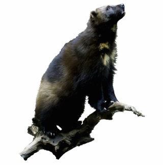 Ornement Photo Sculpture Sculpture en photo de Wolverine d'observation des