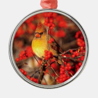 Ornement Rond Argenté Baies femelles et rouges cardinales, IL