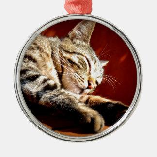 Ornement Rond Argenté Beau chat tigré