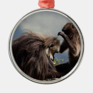 Ornement Rond Argenté Deux babouins de gelada (gelada de Theropithecus)