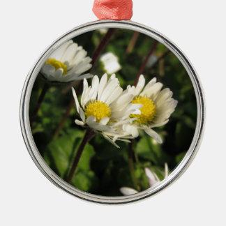 Ornement Rond Argenté Fleurs de marguerite blanche sur l'arrière - plan
