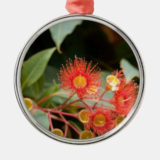 Ornement Rond Argenté Gomme fleurissante rouge (ficifolia de Corymbia)