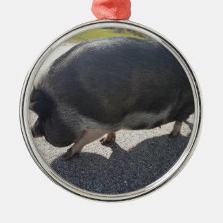Ornement Rond Argenté Grand porc