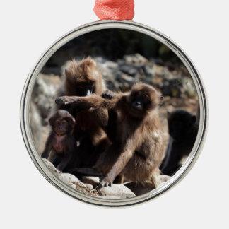 Ornement Rond Argenté Groupe de babouins de gelada (gelada de