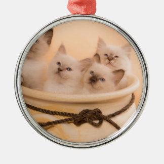 Ornement Rond Argenté kitten in a flower pot