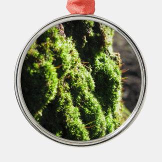 Ornement Rond Argenté La mousse verte dans le détail de nature de la