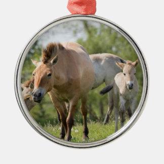 Ornement Rond Argenté Marche du cheval et du poulain de Przewalski