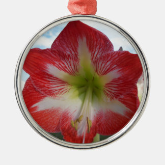 Ornement Rond Argenté MegaStar2 rouge et blanc de l'amaryllis 106a
