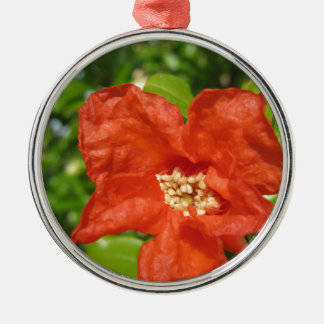 Ornement Rond Argenté Plan rapproché de fleur rouge de grenade