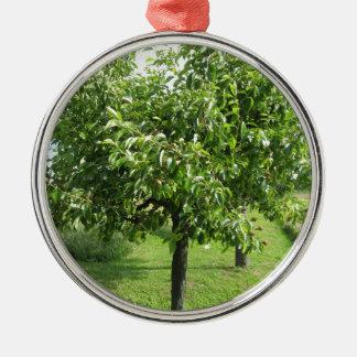 Ornement Rond Argenté Poirier avec le feuille vert et les fruits rouges