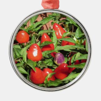 Ornement Rond Argenté Poivrons de piment rouge accrochant sur le plante