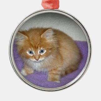 Ornement Rond Argenté Tache sur ce chaton