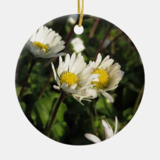 Ornement Rond En Céramique Fleurs de marguerite blanche sur l'arrière - plan
