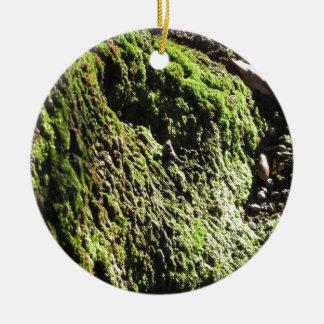 Ornement Rond En Céramique La mousse verte dans le détail de nature de la