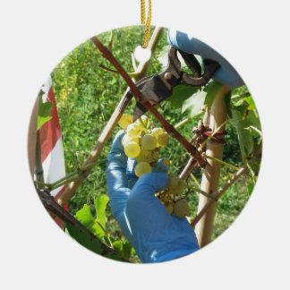 Ornement Rond En Céramique Main coupant les raisins blancs, temps de récolte