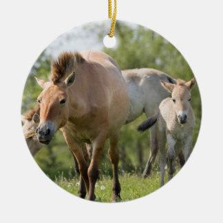 Ornement Rond En Céramique Marche du cheval et du poulain de Przewalski