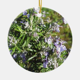 Ornement Rond En Céramique Plante de Rosemary avec des fleurs en Toscane,