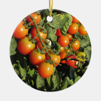 Ornement Rond En Céramique Plantes de tomate s'élevant dans le jardin