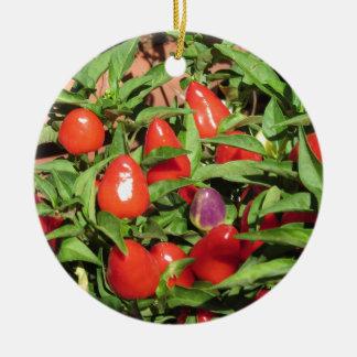 Ornement Rond En Céramique Poivrons de piment rouge accrochant sur le plante