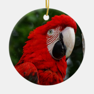 Ornement Rond En Céramique Red Macaw