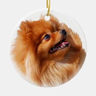 Ornement Rond En Céramique Spitz de Pomeranian