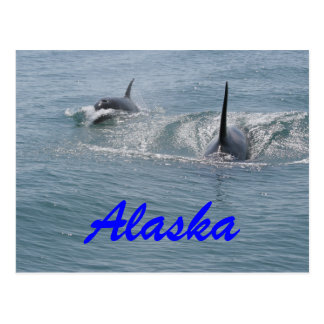 Orque et veau, Alaska Carte Postale
