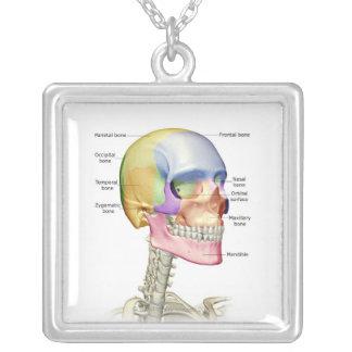 Os de la tête et du cou 3 collier