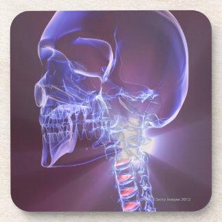 Os de la tête et du cou 4 sous-bock