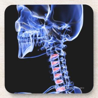Os de la tête et du cou 7 sous-bocks