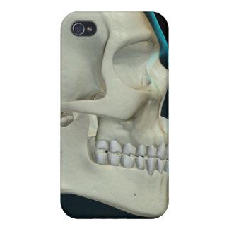 Os de la tête et du visage 2 coques iPhone 4/4S