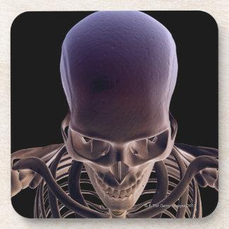 Os de la tête et du visage 3 dessous-de-verre