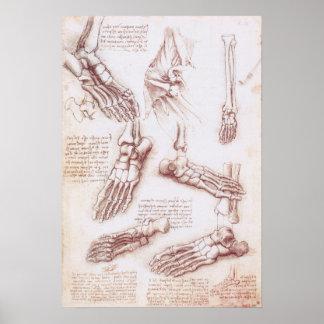 Os de pied squelettiques d'anatomie humaine par da poster