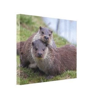 Otterly dans l'amour a enveloppé la copie de toile