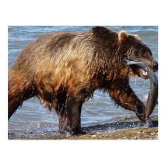 Ours allé pêcher la carte postale