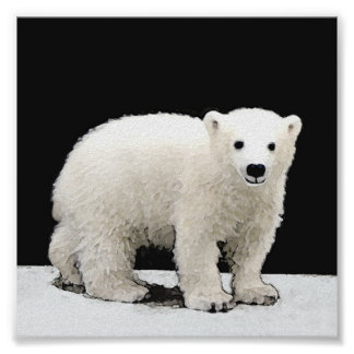 Ours blanc CUB Poster