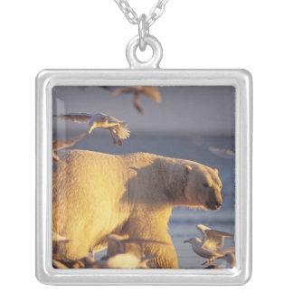 ours blanc, maritimus d'Ursus, avec Pendentif Carré