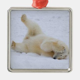 ours blanc, maritimus d'Ursus, petit animal Ornement Carré Argenté