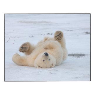 ours blanc, maritimus d'Ursus, petit animal