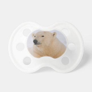 ours blanc, maritimus d'Ursus, se reposant sur Tétine