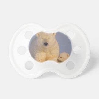 ours blanc, maritimus d'Ursus, truie avec 3 Tétines