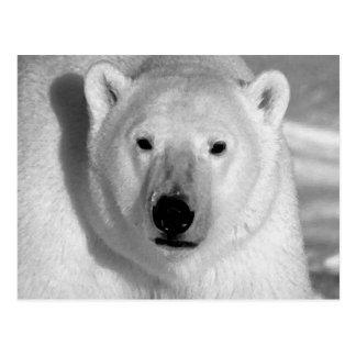 Ours blanc noir et blanc carte postale